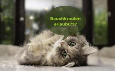 5 Missverständnisse in der Katze-Mensch-Beziehung