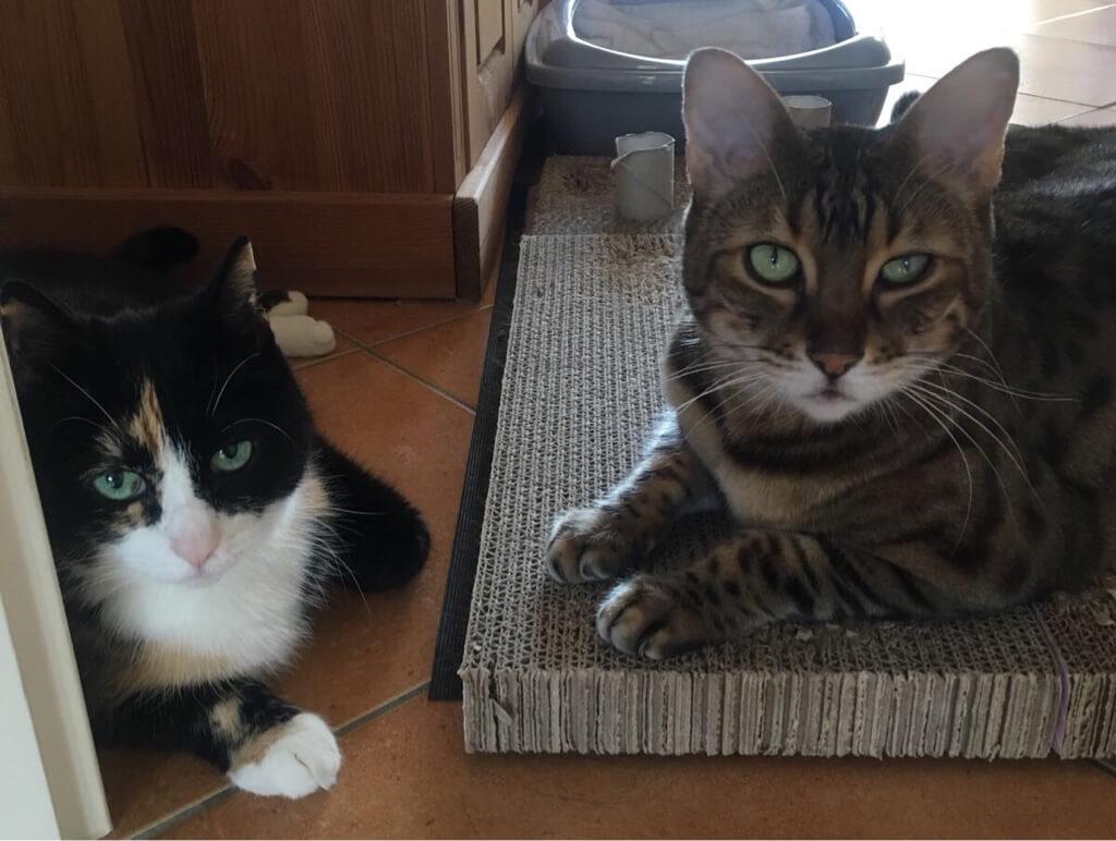 Zwei Katzen an einem Kratzbrett