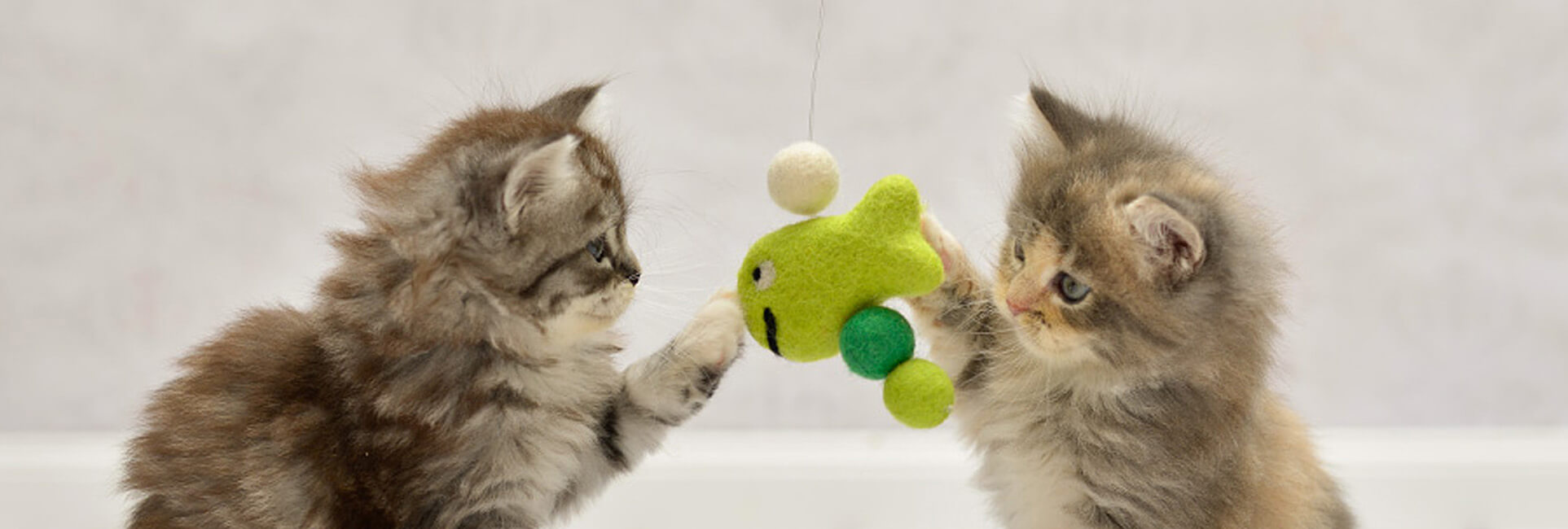 Spielende Kitten