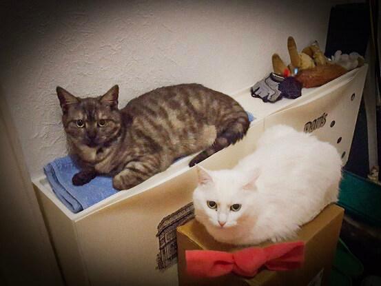 Testimonial für die Zusammenführung von Katzen 2
