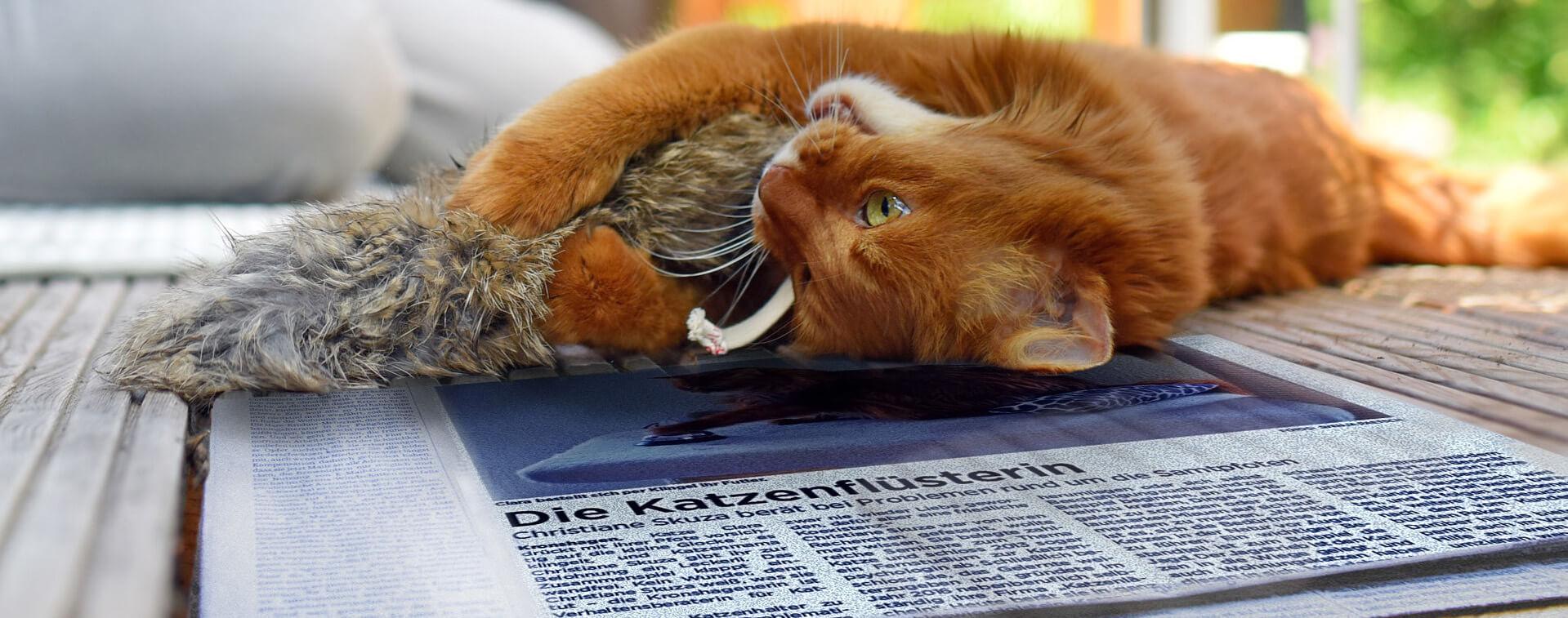 Zeitungungsartikel - Die Katzenflüsterin