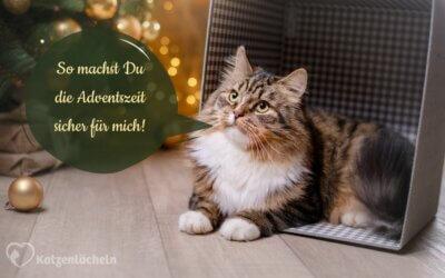 10 Gefahren für Deine Katze in der Vorweihnachtszeit