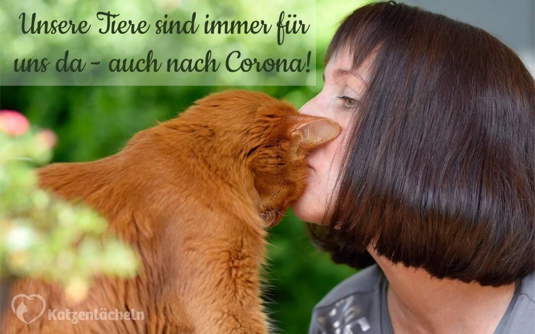 Mensch küsst Katze