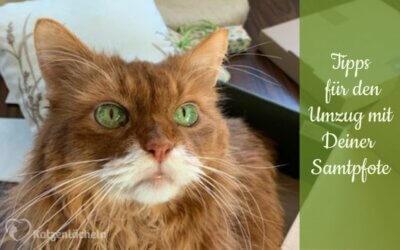 Umzug mit Deiner Katze – so wird's stressfreier!